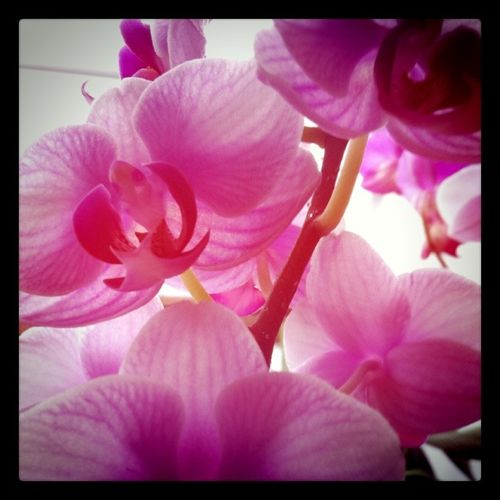 orchid-picture