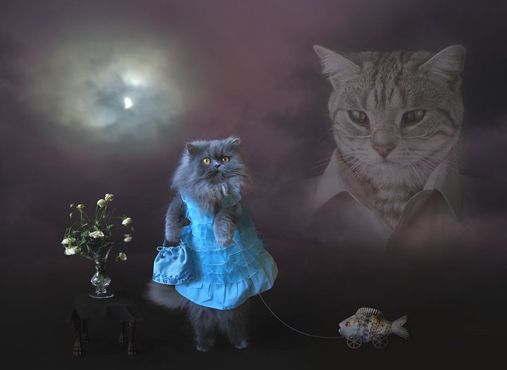 photo-shopped-cats